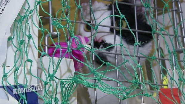 Achtung Kontrolle - Achtung Kontrolle! - Thema U.a.: Flughafen Frankfurt - Mann Reist Mit Zwei Katzen Aus Südkorea Ein