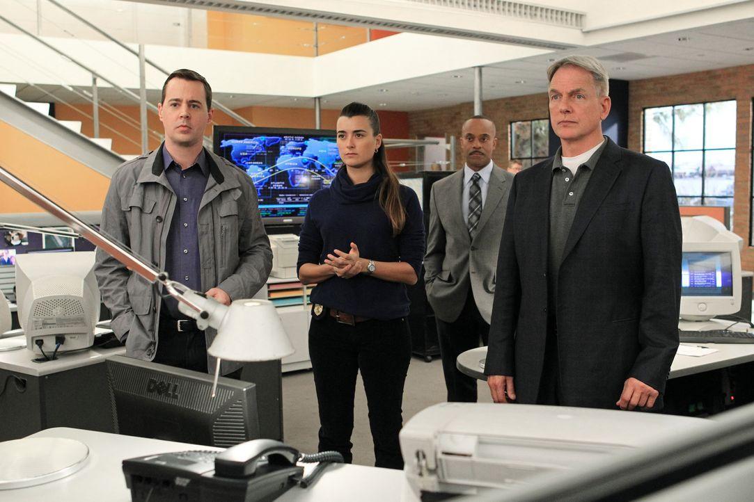 Ein neuer Fall wartet auf McGee (Sean Murray, l.), Ziva (Cote de Pablo, 2.v.l.), Vance (Rocky Carroll, 2.v.r.) und Gibbs (Mark Harmon, r.) ... - Bildquelle: CBS Television