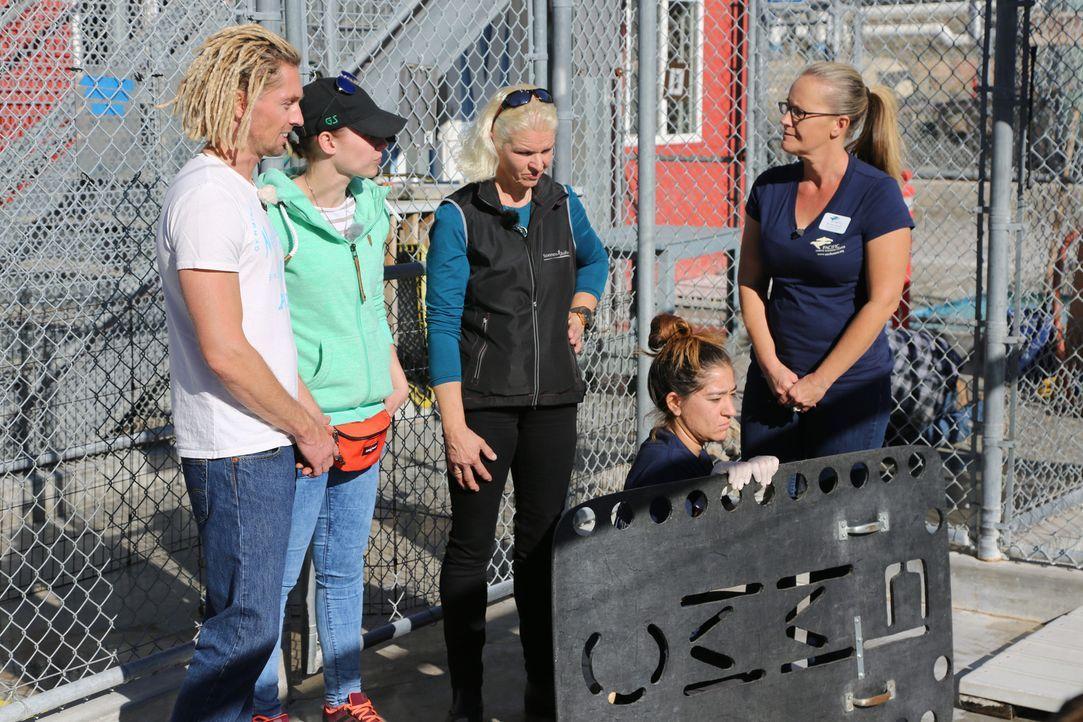 Carmen (M.) und Becky (2.v.l.) statten einer Seehund-Station in Florida einen Besuch ab ... - Bildquelle: kabel eins
