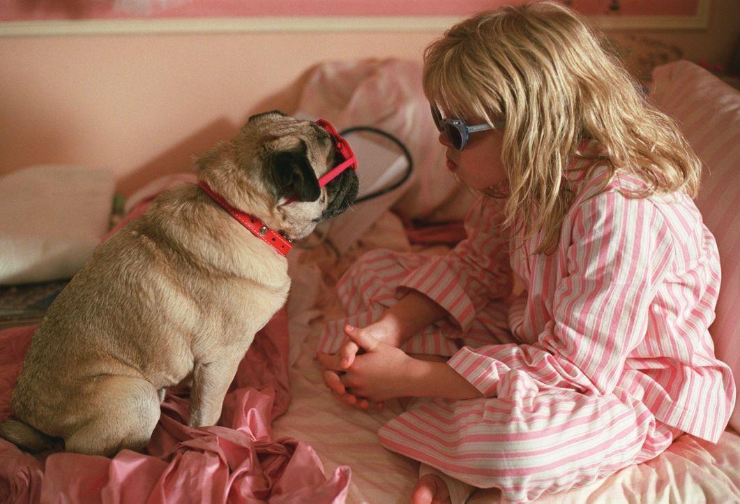 Wenn mit Eloise (Sofia Vassilieva) das Temperament durchgeht, ist auch ihr geliebter Hund Weeni vor ihren Scherzen keineswegs sicher ... - Bildquelle: American Broadcasting Company (ABC)