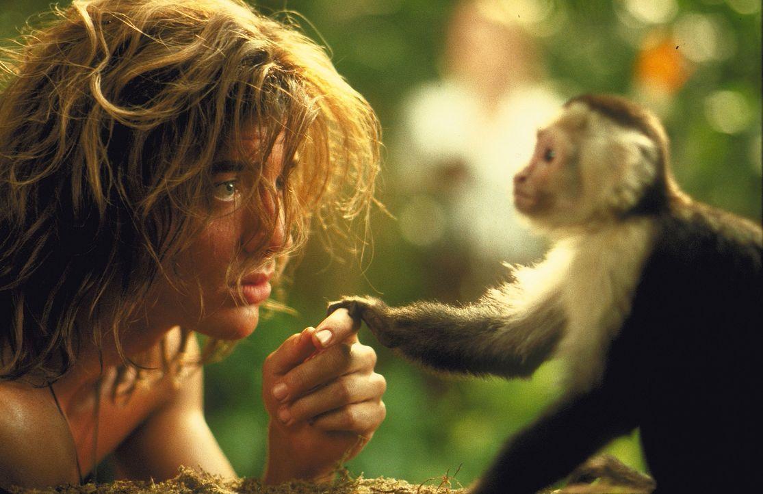 Essen gibt es genug, ein wunderschönes Baumhaus hat er auch und mit allen tierischen Bewohnern versteht sich Dschungelkind George (Brendan Fraser)... - Bildquelle: Disney Enterprises Inc.
