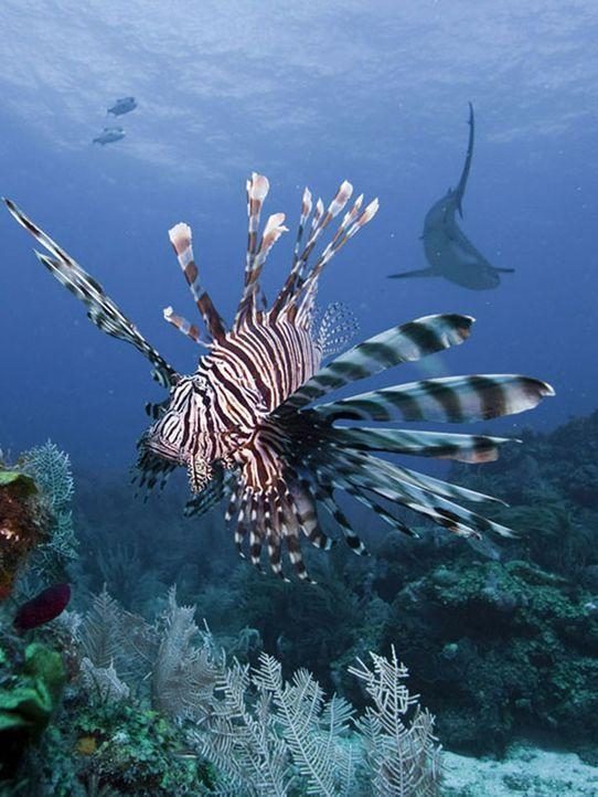 Faszinierende Flora und Fauna 1