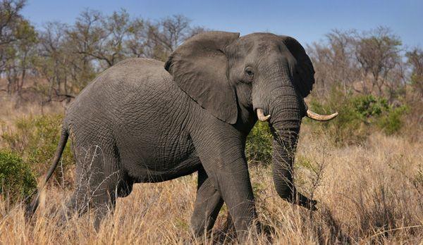 Afrika13 - Bildquelle: dpa