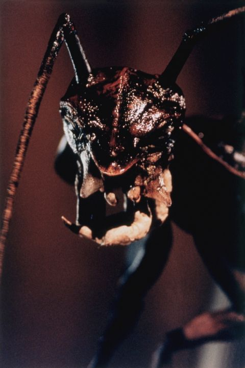 Diese Kakerlake kommt niemals allein, ganz im Gegenteil ... - Bildquelle: Kushner-Locke Company