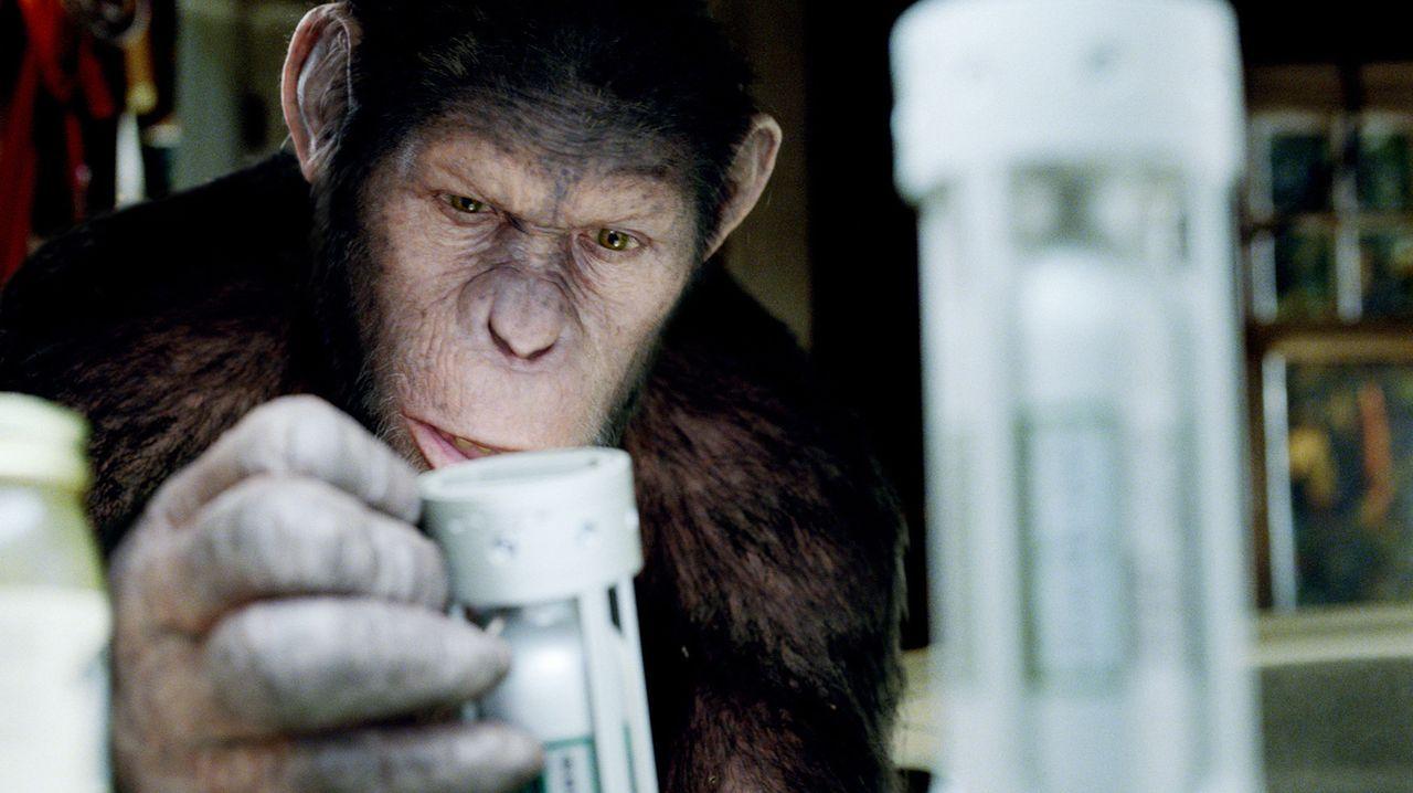 Schnell stellt sich heraus, dass Caesars Intelligenz der seiner Artgenossen weit überlegen ist. Als der Schimpanse auf gerichtliche Anordnung im Tie... - Bildquelle: 2011 Twentieth Century Fox Film Corporation. All rights reserved.