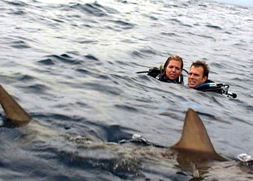 Wenn ein Albtraum Wirklichkeit wird: Susan (Blanchard Ryan, l.) und Daniel (Daniel Travis, r.) ... - Bildquelle: 2004 Lions Gate Films. All Rights Reserved.