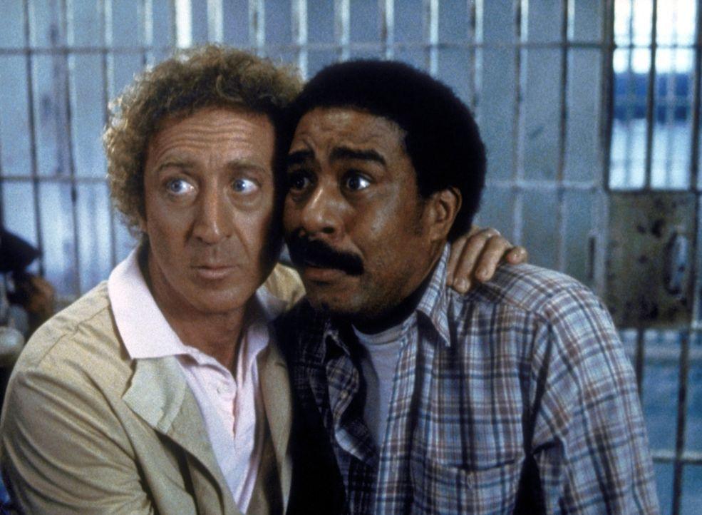 Auf dem Weg nach Hollywood geraten der glücklose Drehbuchautor Skip Donahue (Gene Wilder, l.) und der stellungslose Schauspieler Harry Monroe (Rich... - Bildquelle: Columbia Pictures Corporation