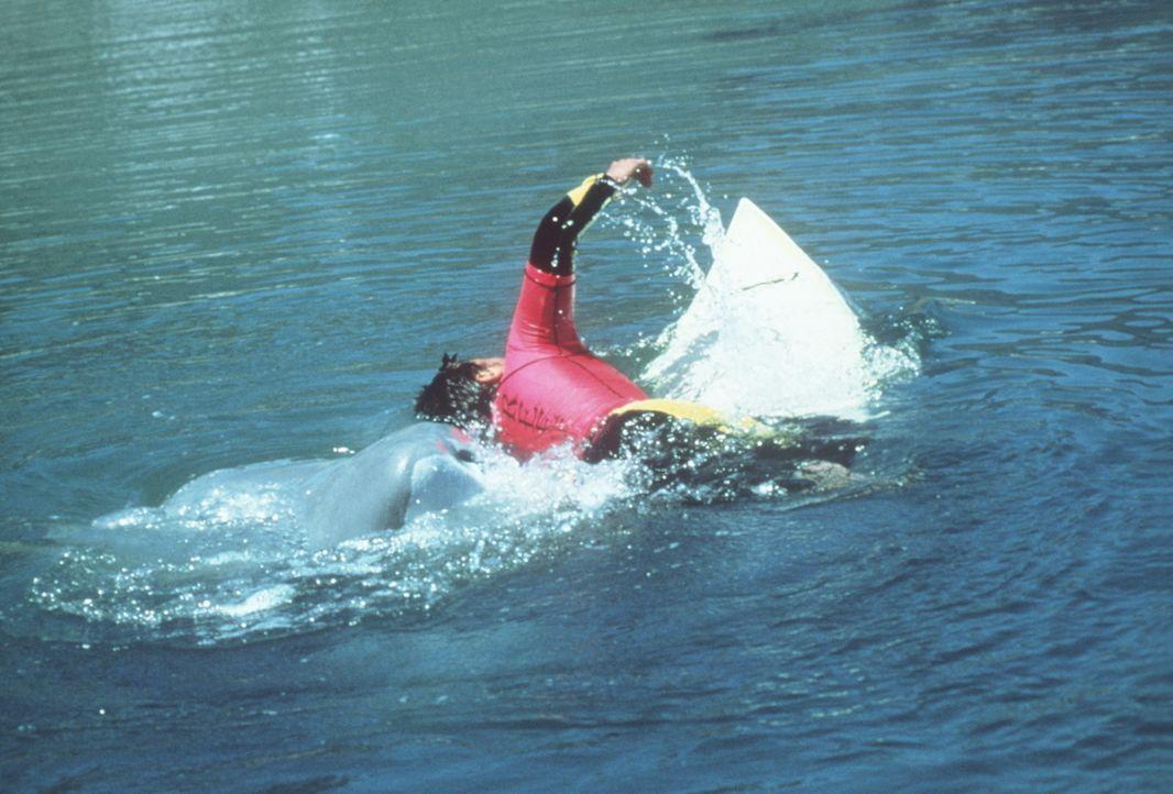 Der Killerhai ist zurück ... - Bildquelle: Nu Image