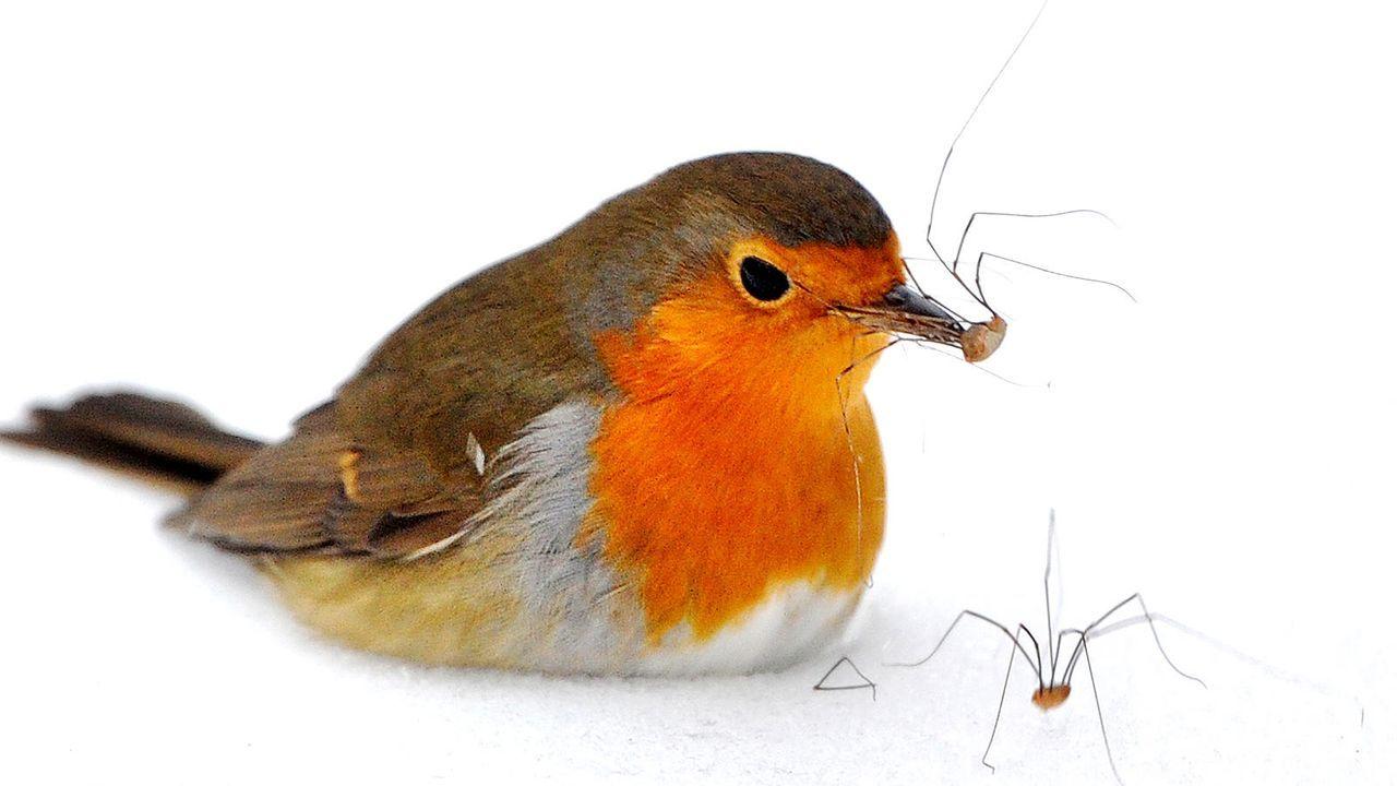 Die lustigsten Fakten aus der Tierwelt - Bildquelle: dpa