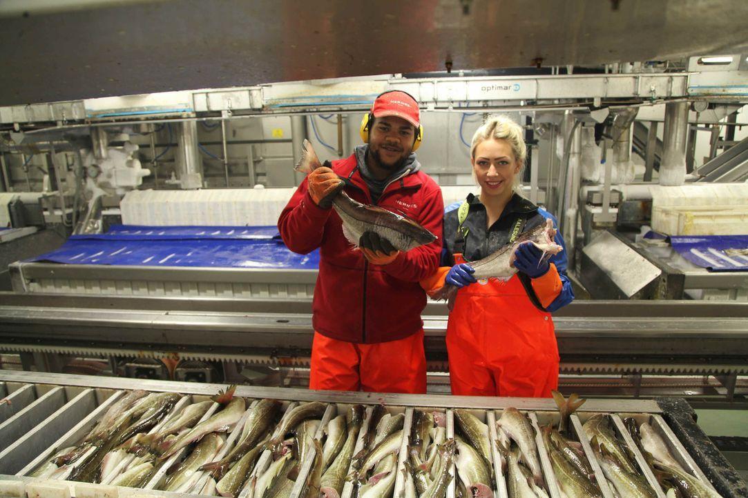 In der Barentssee fischen. Kein Job, den sich Inna (r.) und Moritz (l.) jemals gewünscht hätten, aber getrieben von Geldsorgen, Perspektivlosigkeit... - Bildquelle: kabel eins