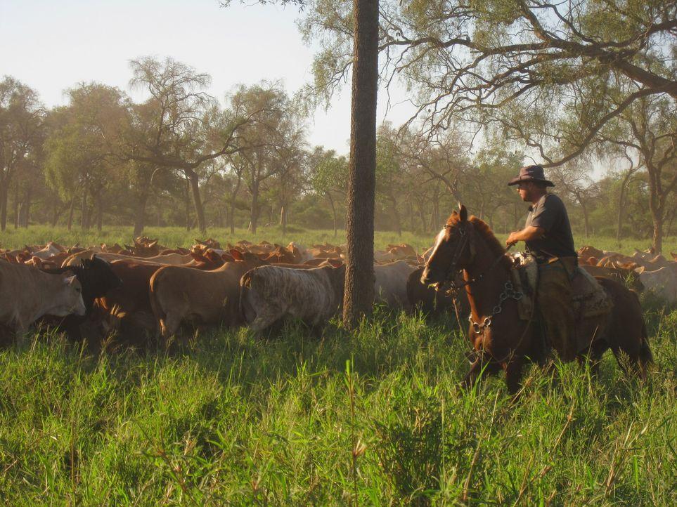 Die ungewöhnliche Reportage über einen deutschen Rinderzüchter in Paraguay. - Bildquelle: kabel eins