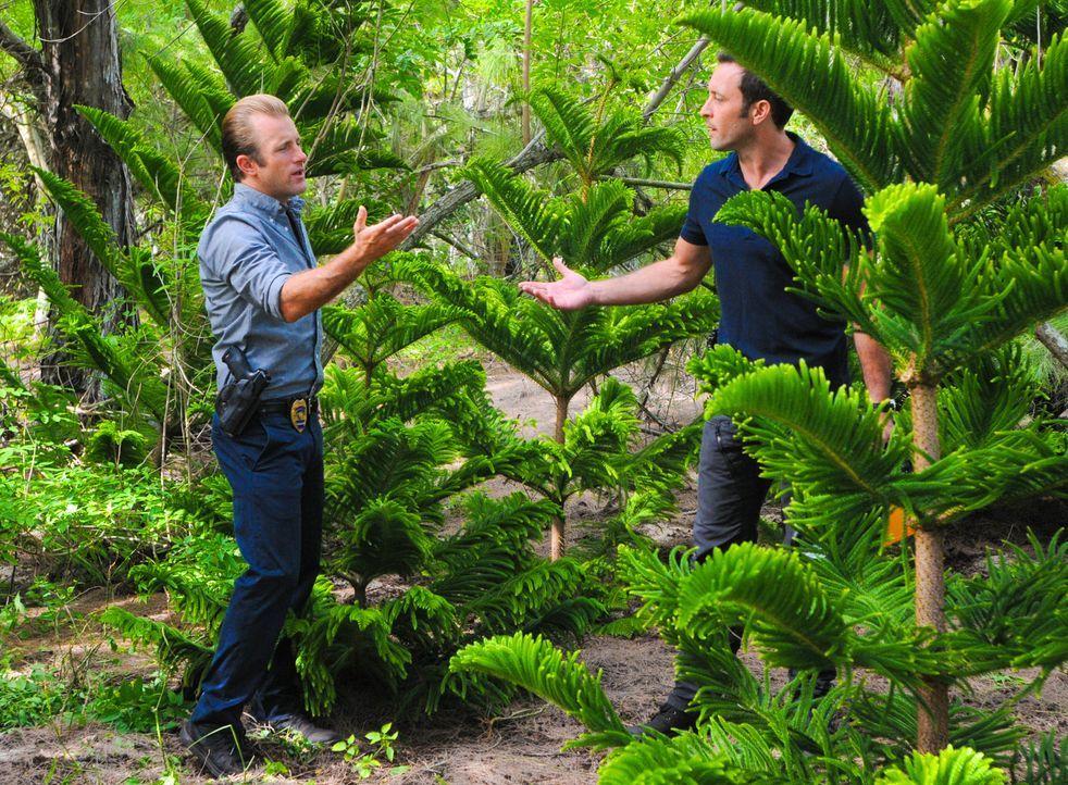 Weihnachten steht vor der Tür und während Steve (Alex O'Loughlin, r.) und Danny (Scott Caan, l.) einen Baum dafür kaufen möchten, wird auf dem Simul... - Bildquelle: 2014 CBS Broadcasting Inc. All Rights Reserved.
