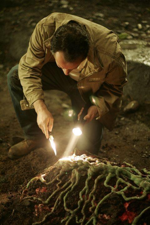 Im Kanalsystem der Stadt entdeckt Professor Lloyd Walker (Gil Bellows) eine mysteriöse pilzähnliche Lebensform, die offenbar ein explosives Gas au... - Bildquelle: Hallmark Entertainment