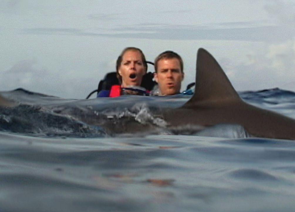 Unter Haien: Susan (Blanchard Ryan, l.) und Daniel (Daniel Travis, r.) ... - Bildquelle: 2004 Lions Gate Films. All Rights Reserved.
