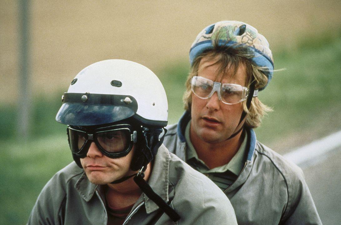 """Die minderbemittelten """"Easy Riders"""" Llyod (Jim Carrey, l) und Harry (Jeff Daniels, r.) müssen so schnell wie möglich nach Aspen. Sie wollen der reic... - Bildquelle: New Line Cinema"""