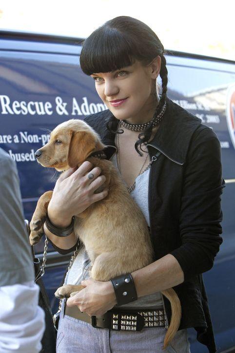 Wird durch eine Entdeckung ziemlich vor dem Kopf gestoßen: Abby (Pauley Perrette) ... - Bildquelle: CBS Television