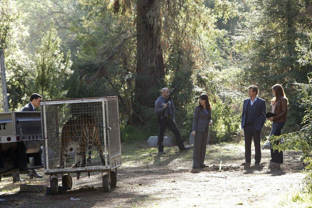 Ein neuer Mordfall beschäftigt Wayne (Owain Yeoman, l.), Teresa (Robin Tunney, M.), Patrick (Simon Baker, 2.v.r.) und Grace (Amanda Righetti, r.) ... - Bildquelle: Warner Bros. Television