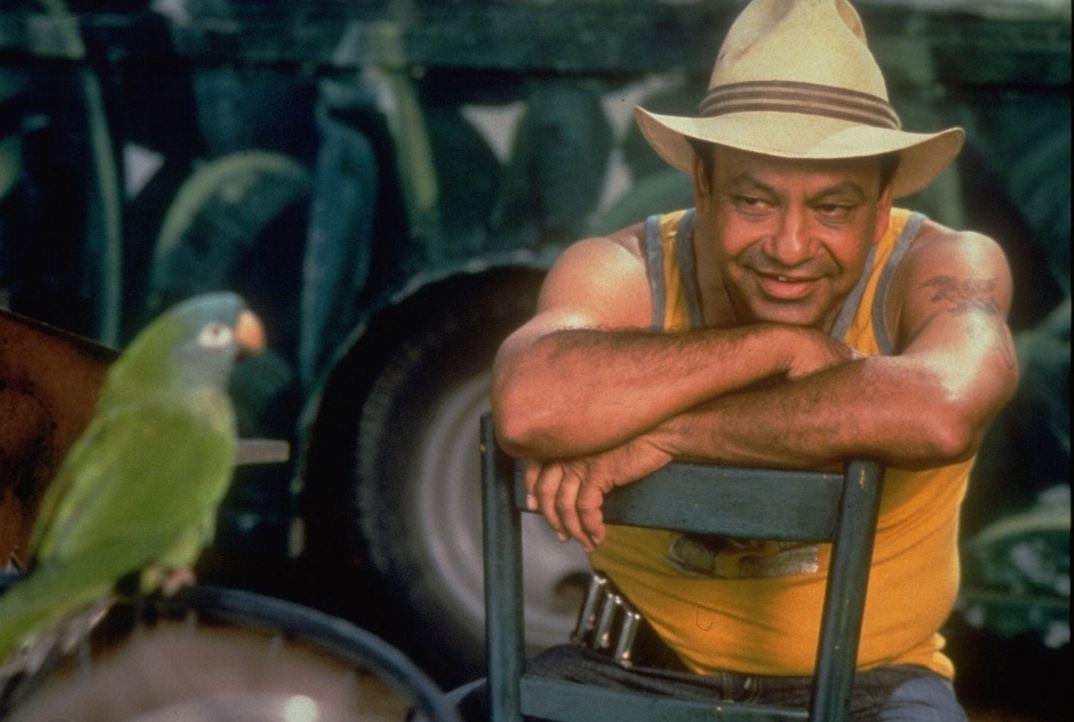 Auf der hoffnungslosen Suche nach seiner besten Freundin stößt der kluge Papagei Paulie (l.) auf den Straßenverkäufer Ignacio (Cheech Marin, r.). Di... - Bildquelle: DreamWorks