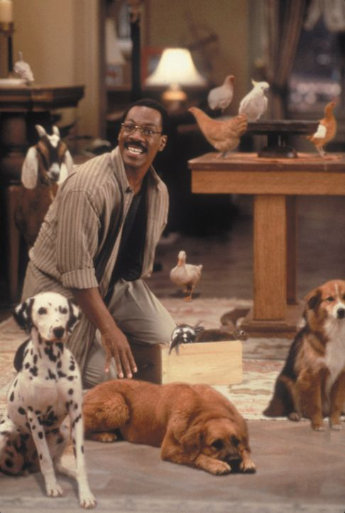Tierarzt Dr. Dolittle (Eddie Murphy) freundet sich in seiner Praxis mit einigen neuen Patienten an ... - Bildquelle: 1998 Twentieth Century Fox Film Corporation. All rights reserved.