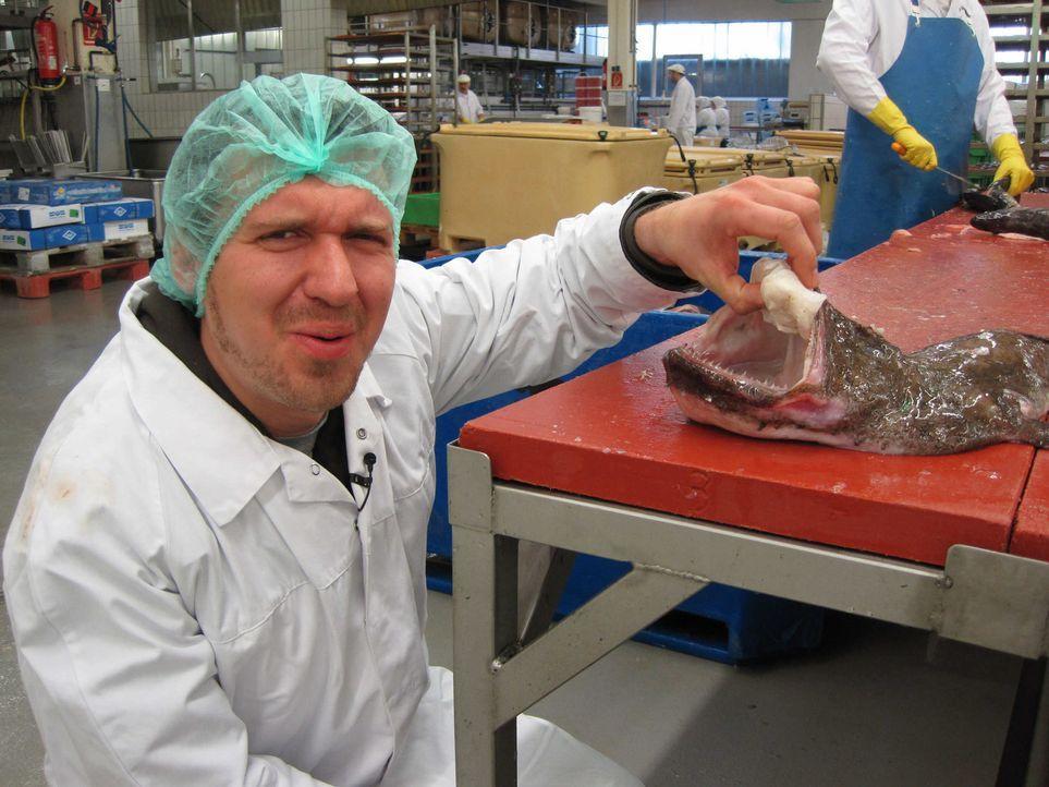 Michael Ränsch (Bild) liebt Fisch, hat ein eigenes Fischrestaurant und kreiert ständig neue, außergewöhnliche Gerichte. Kanner Fischhasser Fred... - Bildquelle: kabel eins