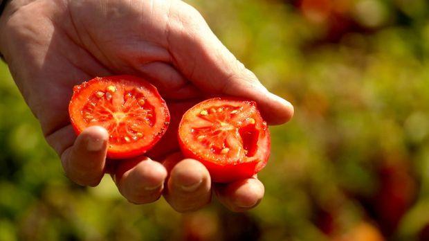Abenteuer Leben - Abenteuer Leben - Donnerstag: Die Beste Tomate Der Welt Und Ihr Geheimnis