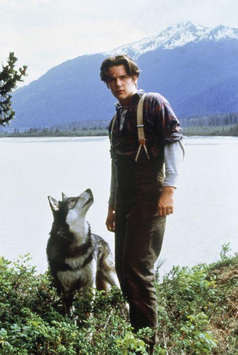 Mit seinem tierischen Freund Wolfsblut macht sich der junge Jack (Ethan Hawke) auf die Suche nach der Goldmine seines Vaters ... - Bildquelle: Walt Disney Pictures